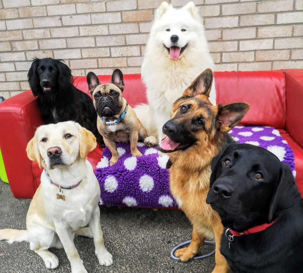 Needham Market Dog Daycare
