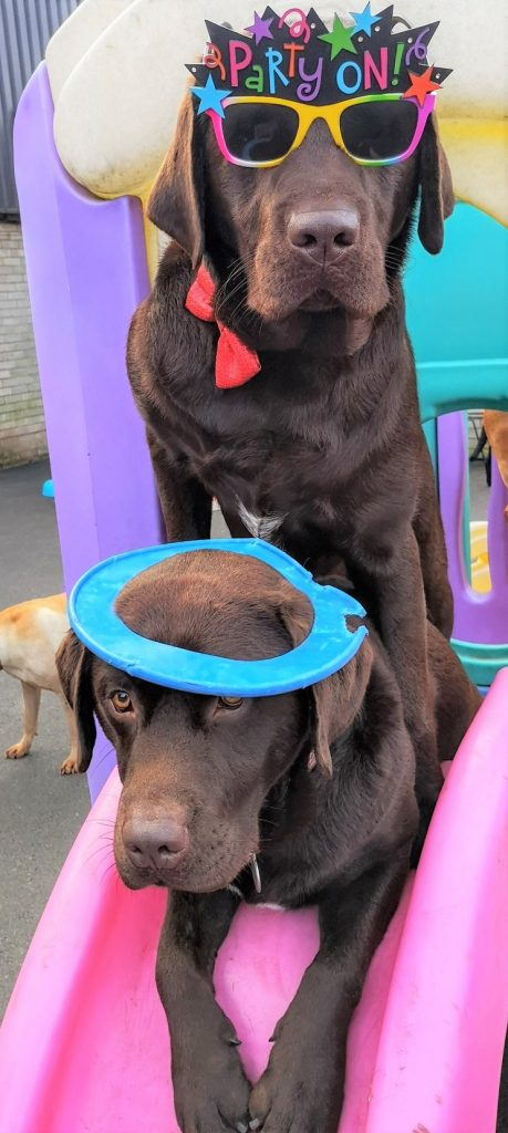 Dog parties, Needham Canine Creche