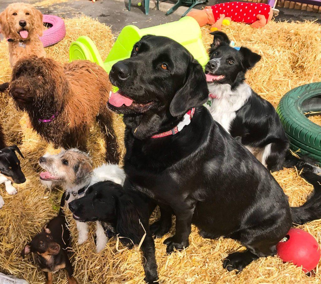 Dog playground, Ipswich, Suffolk