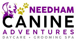 Needham Canine Adventures