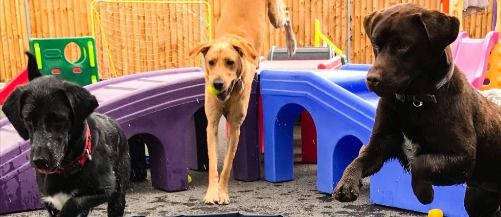 Specialist play equipment for dogs