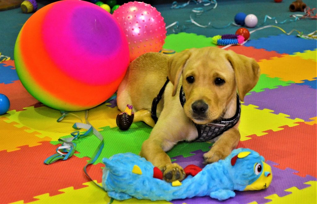 Puppy Parties, Needham Canine Adventures