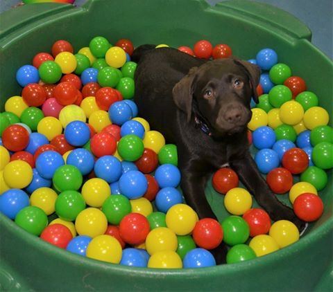 Puppy party, ballpit