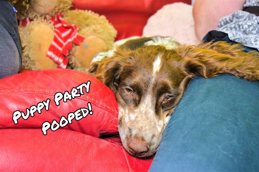 puppy party pooped